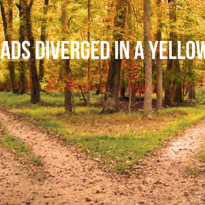 The Growth Path vs. the Guru Path